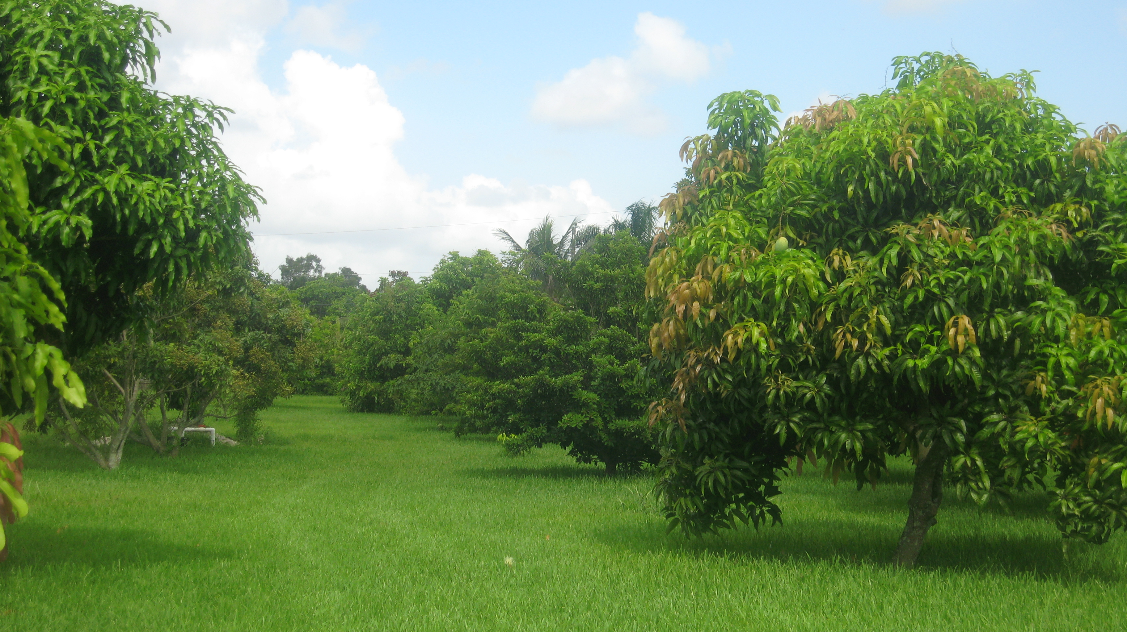 Ashram gardens and fruit trees