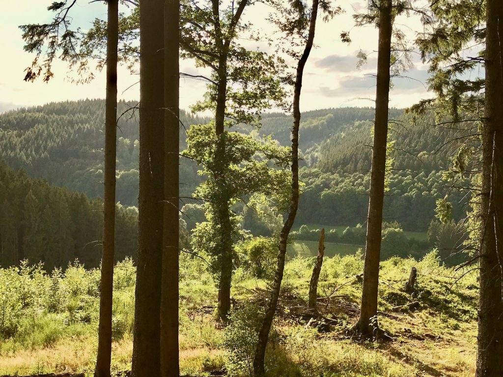 Forest views of Hellenthal